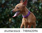 a friendly dog tongue out... | Shutterstock . vector #748462096