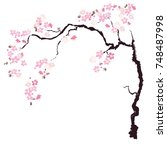 hand drawn cherry branches... | Shutterstock .eps vector #748487998