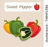 sweet pepper vector illustration | Shutterstock .eps vector #748491586