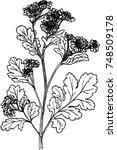 flowers black line | Shutterstock .eps vector #748509178