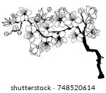 hand drawn and outline cherry... | Shutterstock .eps vector #748520614