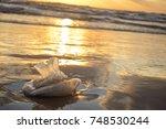 Jellyfish At The Seaside At...