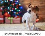 dog jack russel under a... | Shutterstock . vector #748606990