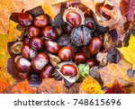 horse chestnuts or aesculus... | Shutterstock . vector #748615696