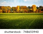 Green Field With Autumnal Tree...