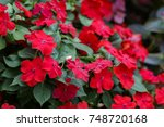 Image Of Beautiful Red...