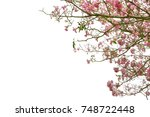 pink trumpet tree or tabebuia... | Shutterstock . vector #748722448