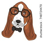 snout of basset hound in... | Shutterstock . vector #748724470