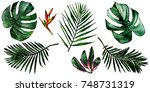 tropical hawaii leaves in a... | Shutterstock . vector #748731319