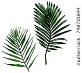tropical hawaii leaves in a... | Shutterstock . vector #748731844