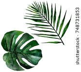 tropical hawaii leaves in a... | Shutterstock . vector #748731853