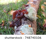 Tree Branch With Variety Of...