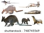 collection of different wild... | Shutterstock . vector #748745569