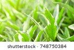 green leaf texture background... | Shutterstock . vector #748750384