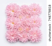 creative pastel pink flowers... | Shutterstock . vector #748778818