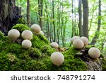 Clusters Of Young Mushrooms...