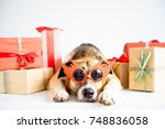 christmas with a dog | Shutterstock . vector #748836058