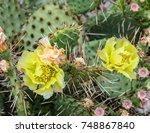 yellow opuntia humifusa flower  ... | Shutterstock . vector #748867840