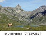 cow in swiss alps valley | Shutterstock . vector #748893814