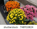 Small photo of Chrysanthemum plants on a tombstone for All Saints Day