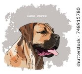 breeds of dogs collection  cane ... | Shutterstock .eps vector #748915780