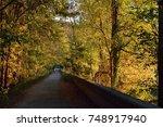 Lone Jogger Amongst Fall Leaves