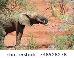 elephant drinking water from... | Shutterstock . vector #748928278