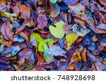 closeup red dry autumn leaves... | Shutterstock . vector #748928698