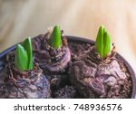 young plant in hands. planting...   Shutterstock . vector #748936576