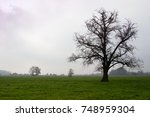 Mighty Tree On Pastures In...