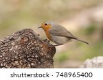 erithacus rubecula | Shutterstock . vector #748965400