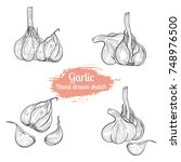 hand drawn sketch garlic.... | Shutterstock .eps vector #748976500