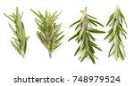 rosemary isolated on white...   Shutterstock . vector #748979524