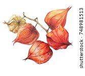 Orange  Red Dry Physalis Fruit...