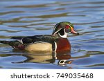 swimming wood duck male with...   Shutterstock . vector #749035468
