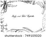 vegetable salad  illustration... | Shutterstock .eps vector #749105020
