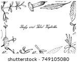 vegetable salad  illustration... | Shutterstock .eps vector #749105080