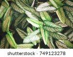 background pattern  beautiful...   Shutterstock . vector #749123278