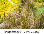 beautiful grass   flower grass  ... | Shutterstock . vector #749123359