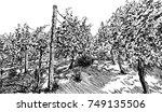 vineyard landscape hand drawn... | Shutterstock .eps vector #749135506