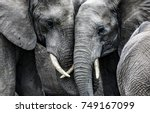 elephants | Shutterstock . vector #749167099