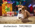 dog jack russel under a... | Shutterstock . vector #749198023