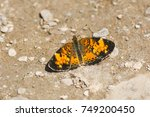 Small photo of Northern Crescent Butterfly alit on a muddy path. Carden Alvar Provincial Park, Kawartha Lakes, Ontario, Canada.