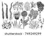 decorative collection of hand... | Shutterstock . vector #749249299
