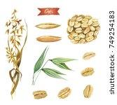 watercolor illustration of oat... | Shutterstock . vector #749254183