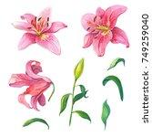 Pink Lilies.floral Set...