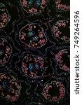 margarites blossom transversely ... | Shutterstock . vector #749264596