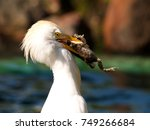 white heron eating a frog | Shutterstock . vector #749266684