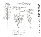 oat branches set   vector... | Shutterstock .eps vector #749279140