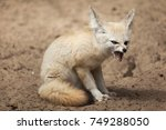 fennec fox  vulpes zerda ....   Shutterstock . vector #749288050